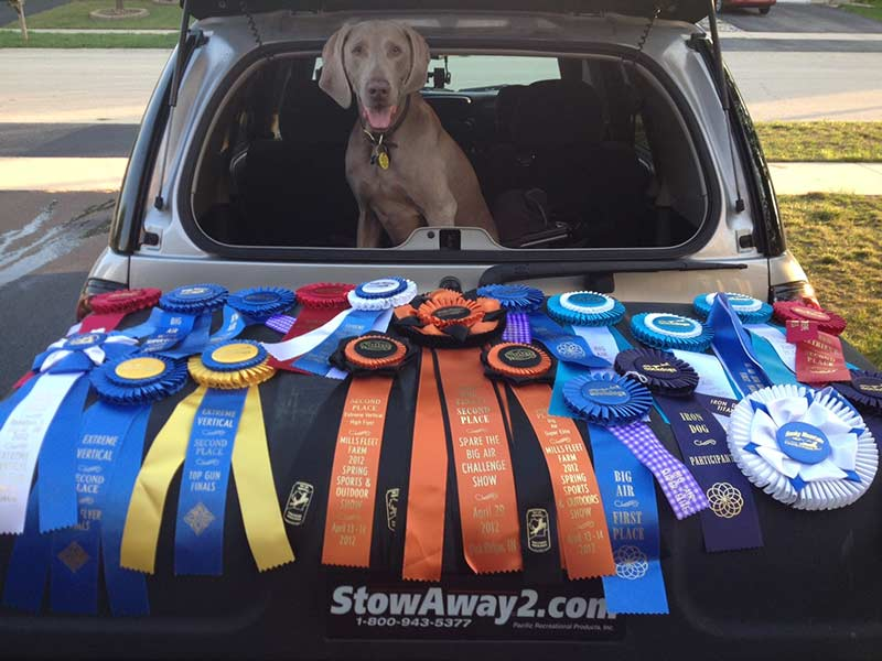 Wrigley behind StowAway MAX Carrier looking proud of his championship ribbons