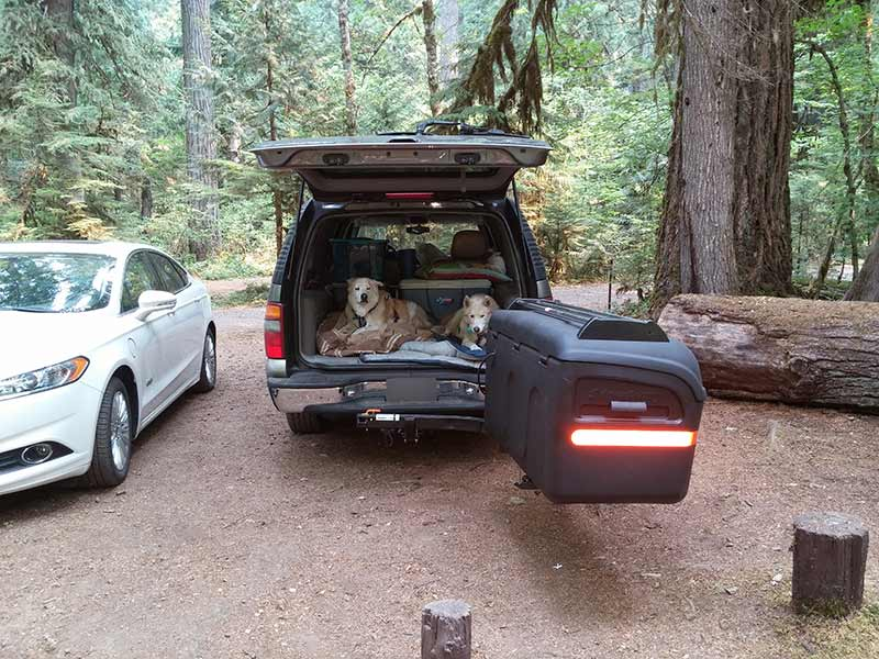 Two dogs laying in the back of SUV at Kingfisher Campground in Oregon