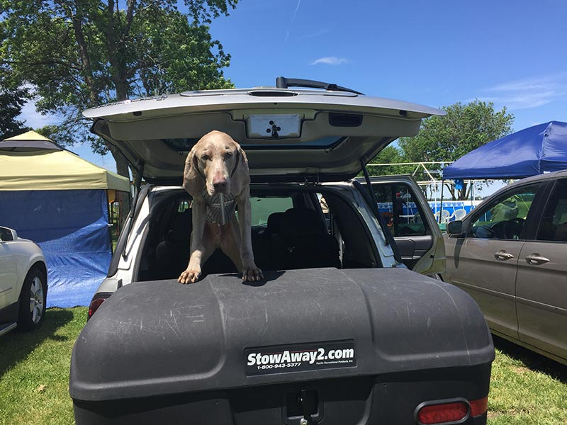 Dog standing on top of StowAway MAX Carrier