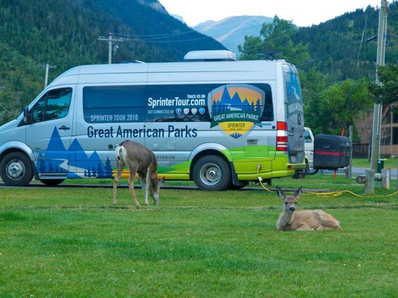 Deer grazing in front of Sprinter tour van