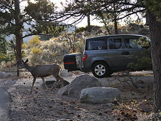 Deer walking past Honda Element with StowAway MAX Cargo Carrier