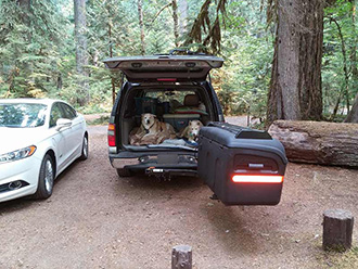 Two dogs laying in back of SUV with StowAway MAX Cargo Carrier with Lid Rack accessory