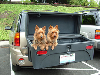 Two dogs hanging out in a StowAway Standard Cargo Carrier on GMC Envoy