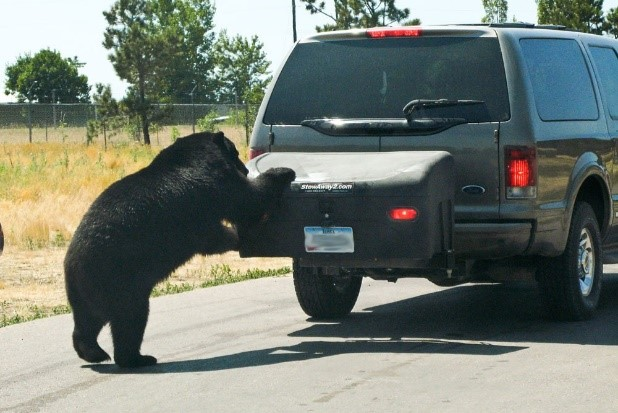 Ford Expedition with StowAway Standard-Bear Attack
